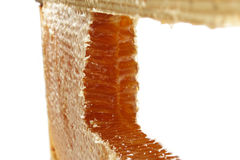 005蜂蜜 库存图片