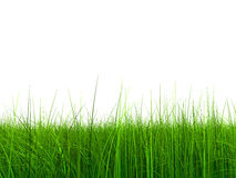 005 erba (a) a 9000 senza cielo Immagini Stock Libere da Diritti
