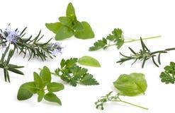 005 herbs Στοκ Εικόνα