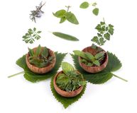 009 herbs Στοκ Εικόνες