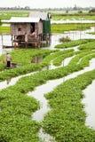 01个农厂菠菜水 免版税库存图片