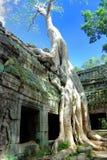 01个柬埔寨prohm系列ta寺庙 库存照片
