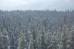01个森林下雪 库存图片