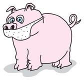 01个流感猪 库存图片
