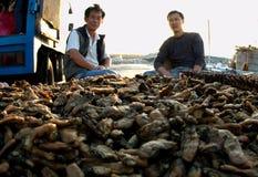 01个牡蛎批发商 免版税库存照片