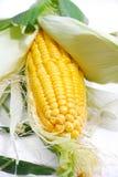 01个玉米系列 库存图片