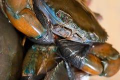01个螃蟹系列 库存照片