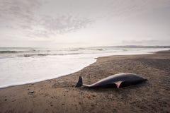 01停止的海豚 免版税图库摄影