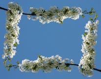 01朵花框架正常 免版税库存图片