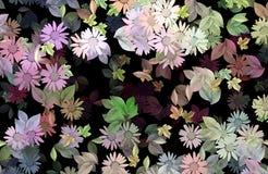 01朵雏菊 免版税库存图片