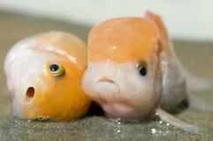 01条停止的鱼 免版税库存图片