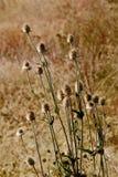 01植物名 免版税库存图片