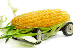 01玉米卡车 库存图片