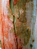 01纹理结构树 库存图片