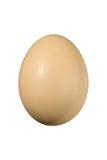 01鸡蛋 免版税库存图片