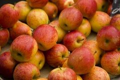 01 äpplen Royaltyfri Foto