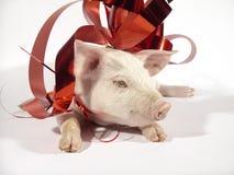 01 świnia zdjęcia stock