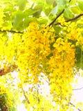 01 żółty kwiat Obrazy Stock