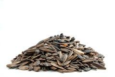 01 высушенная серия семян дыни Стоковые Фотографии RF