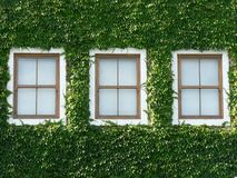 01 окно плюща стоковые изображения