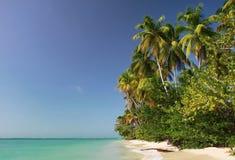 01 пляж caribbean Тобаго Стоковое фото RF