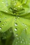 01 серия дождя Стоковые Фотографии RF
