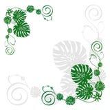 01 цветок Стоковая Фотография