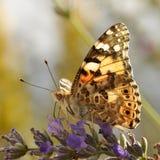 01 4 fjärilar Arkivbild