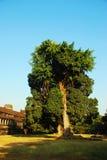 01 drzewo Zdjęcie Stock