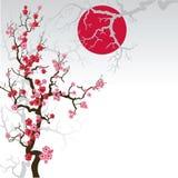 01 gałęziasty Sakura Obrazy Royalty Free