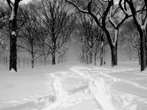 01 häftig snöstorm Central Park Fotografering för Bildbyråer