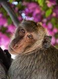 01 hin华猴子 库存图片