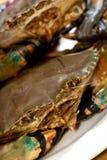 01 krabbaserie Royaltyfri Fotografi