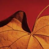 01 liści pomarańcze Obraz Stock