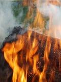 01 pożarniczy las Fotografia Royalty Free