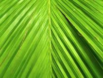 01 roślinnych Fotografia Stock