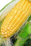 01 séries de maïs Photographie stock libre de droits