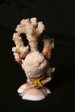 01 seashells коралла Стоковое Изображение RF