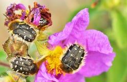 01 skalbaggar Arkivfoton