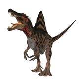 01 spinosaurus 免版税库存图片