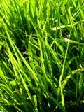 01 trawy. Zdjęcie Stock