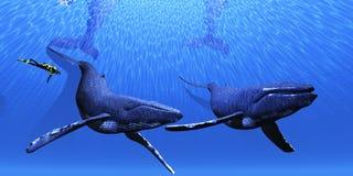01 wieloryb Zdjęcia Royalty Free