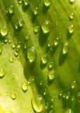 01 zrzutu liściach wody Fotografia Royalty Free