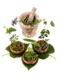 011 herbs Στοκ φωτογραφία με δικαίωμα ελεύθερης χρήσης