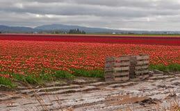 0115 palettes d'agriculture s'approchent de grandes zones de tulipe Images libres de droits