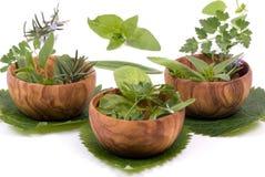 012 herbs Στοκ εικόνα με δικαίωμα ελεύθερης χρήσης