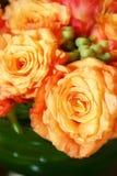013 померанцовых розы тайской Стоковое Изображение RF