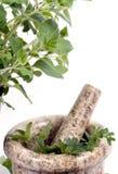 014 herbs Στοκ εικόνες με δικαίωμα ελεύθερης χρήσης