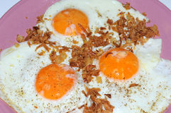 015鸡蛋 库存图片