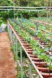 02个农厂草莓 免版税库存图片